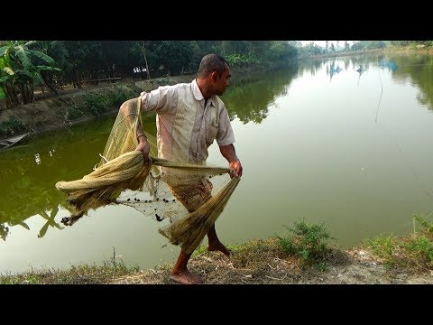 Net Fishing | Catching Fish With Cast Net | Net Fishing in the village (Part-156)