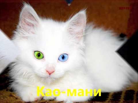Забавные беленькие котята Као-Мани играют на кровати и кусают друг .