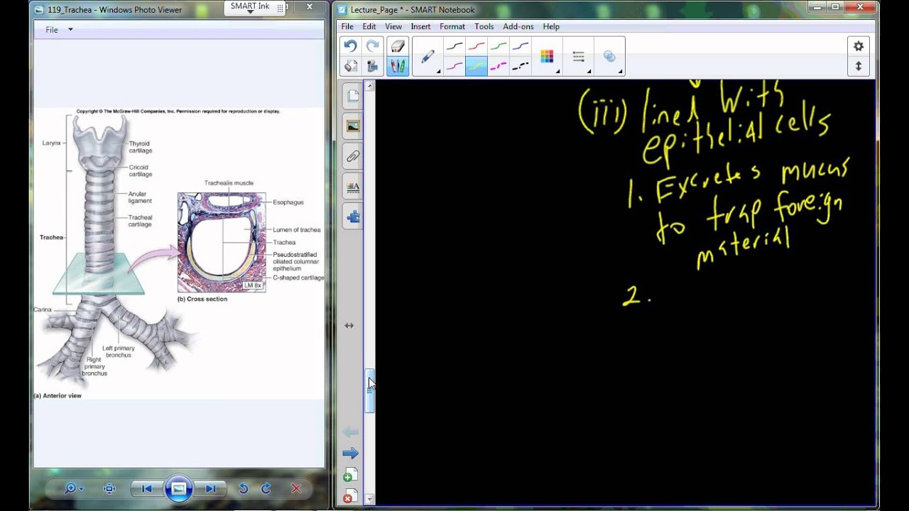 Lecture 27 A&P II - Respiratory System (Chapter 22) - YouTube