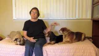 World Dog Training Motivation Transparency Challenge