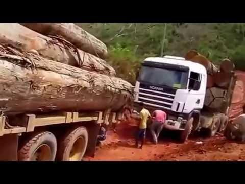 AMAZING AMAZON LOGGING ! Biggest LOGGING trucks - biggest wood