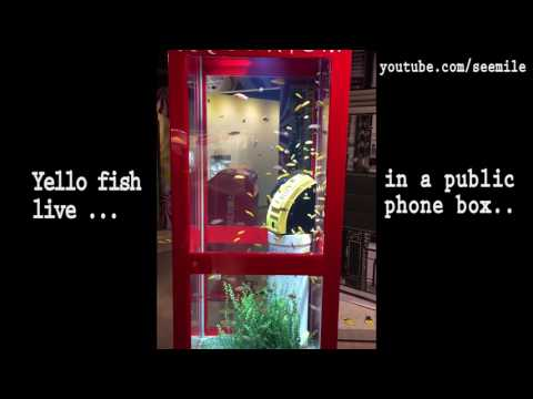[Korea Blah Blah] Yellow fish live in a public telephone box. by seemile.com