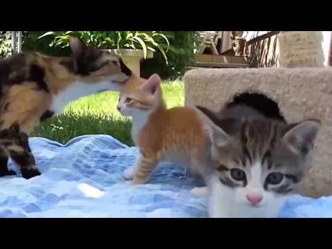 Веселые кошки и котята, подборка № 3