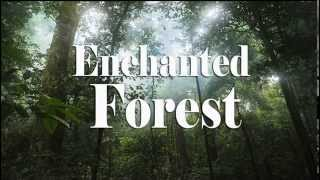 Enchanted Forest - Best Relax and Sound of Nature