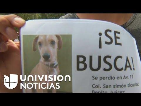 Mascotas Perdidas, Otra Preocupación Causada Por El Terremoto En México