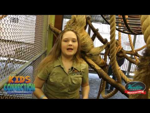 Bongo Bree Sloth Encounter on Kids Connection