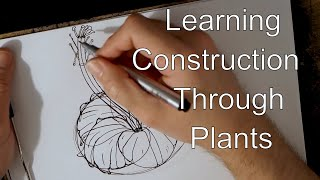 Drawabox  Lesson 3: Applying Construction to Plants with  Hibiscus Drawing Demo