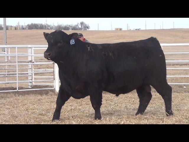 Express Ranches Lot 65