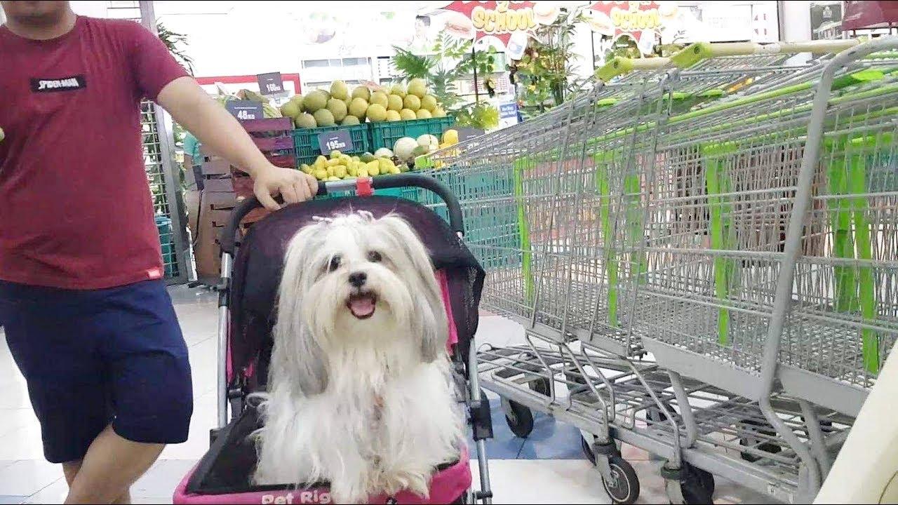 Pet Friendly Supermarket Market Market Taguig Youtube