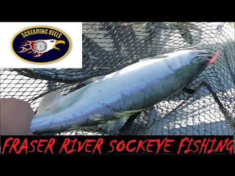 How To Fish For Fraser River Sockeye At Sandheads