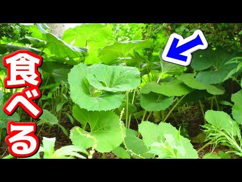 家の裏に生えてた草を食べる