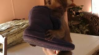 My Broken Monkey