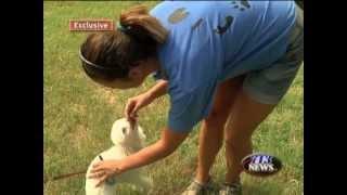 Blind Dog Trainer Tames Man's Best Friend