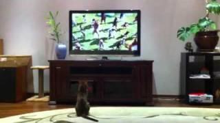кот смотрит фильм про собак