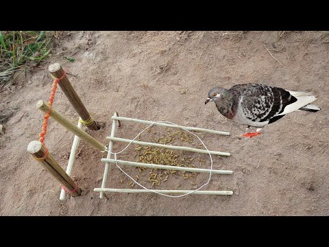 Creative Easy DIY Simple Bird Trap Using Wood Band U0026 Rubber