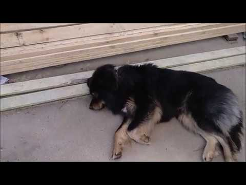 Как травануть собаку