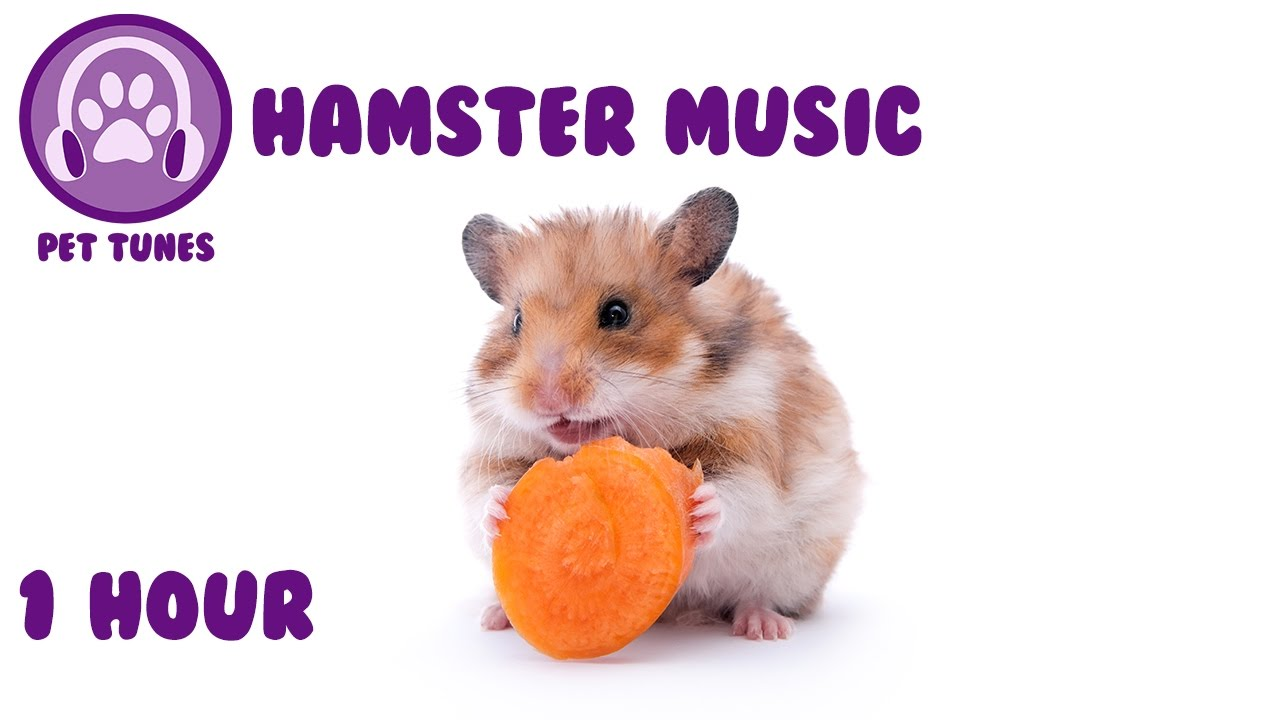 Music for Hamsters  Relax Your Pet Hamster with Calming Tunes from Pet  Tunes