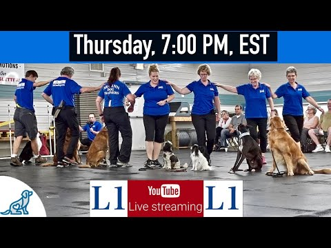 Dog Training Live Entertainment Show - Professional Dog Training Tips