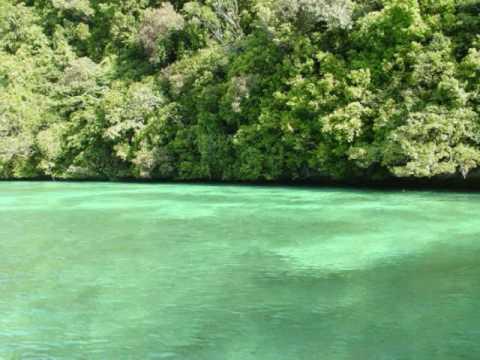 PALAU ISLAND.wmv