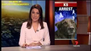 K9 Arrest | 7news Perth | 25/08/2013