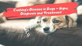 Cushing's Disease in Dogs - Signs, Diagnosis and Treatment