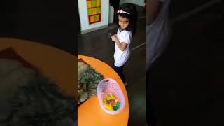Alpha Preschool,   Project Animals