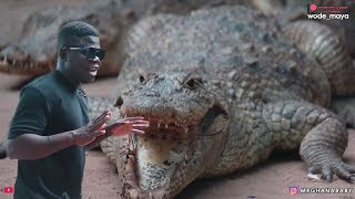 You Wont Believe They Live With Crocodiles