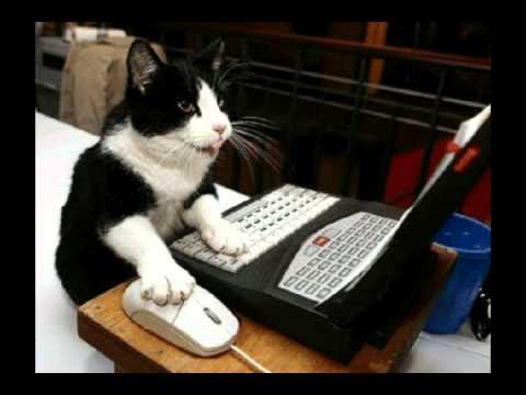 Картинки по запросу приколы про кошек ютуб