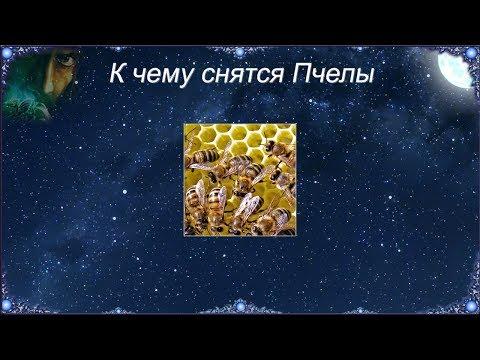 К чему снятся Пчелы (Сонник)