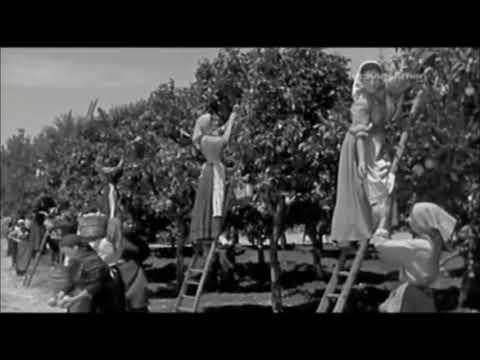 Cavalleria Rusticana 1953