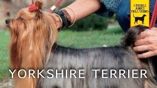 Yorkshire Terrier Trailer Documentario