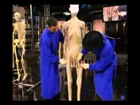 Anatomia pentru incepatori