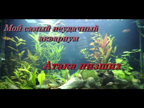 Морские водоросли — Википедия