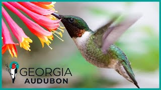 Lileina Joy: Georgia Audubon Ad 2020 (Shortened Version)