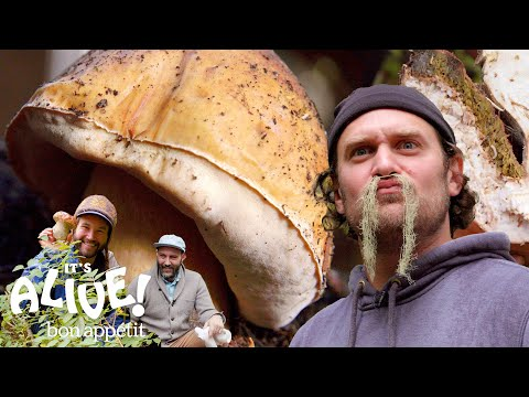 Brad Forages for Porcini Mushrooms | Its Alive | Bon Appétit