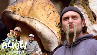 Brad Forages for Porcini Mushrooms | It\'s Alive | Bon Appétit