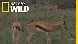 FASTEST Animals! | Nat Geo Wild