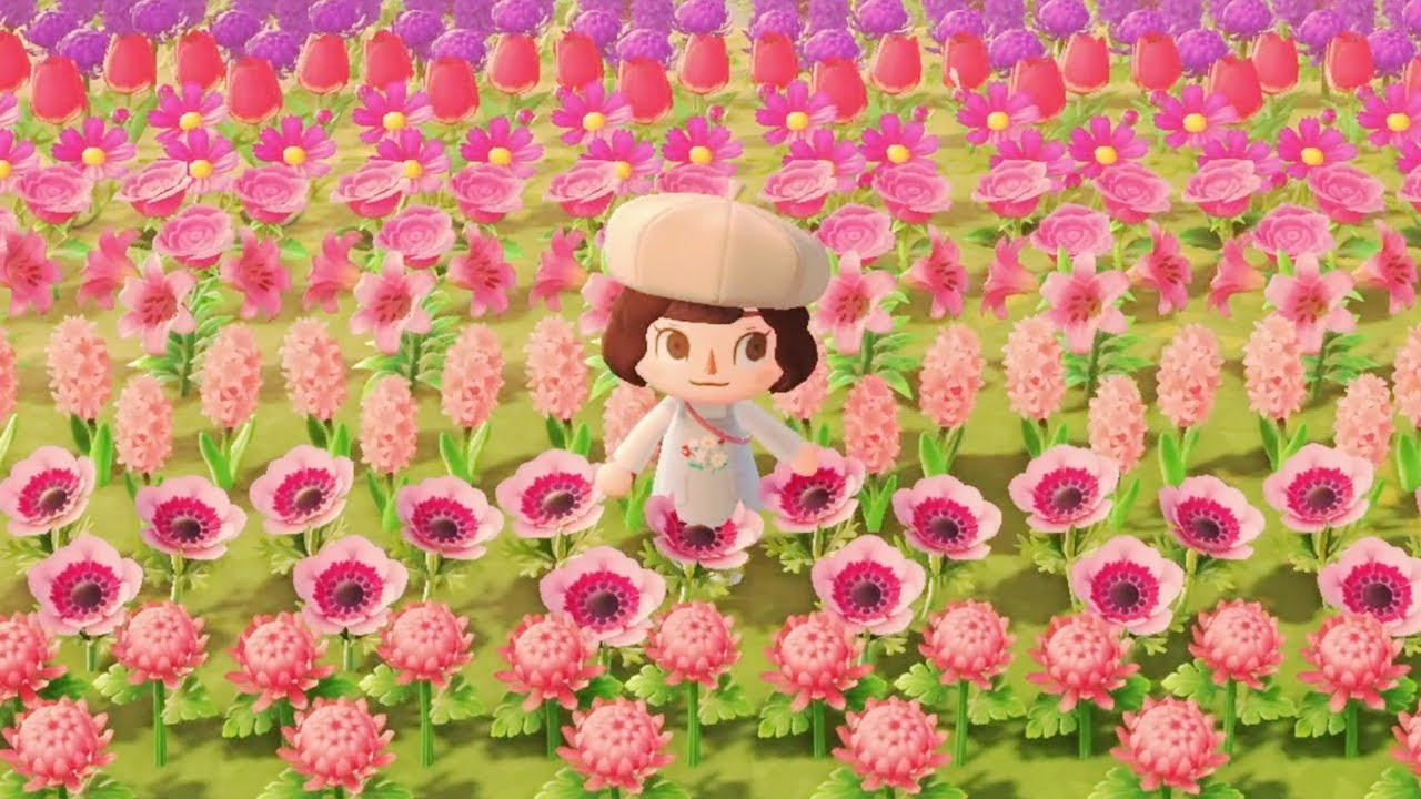 The Island With The Reddit Famous Flower Field Animal Crossing