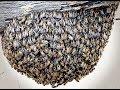 Зачем американцы создали АРМИЮ пчел-убийц - Секретный фронт, 12.12.2018
