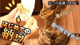 納豆を初めて食べたら踊り始めた猫