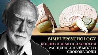 Когнитивная психология воли #75. Расщепленный мозг в экспериментах Сперри и свобода воли.