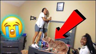 RAT IN THE HOUSE PRANK ON BABYMAMA CREW!!