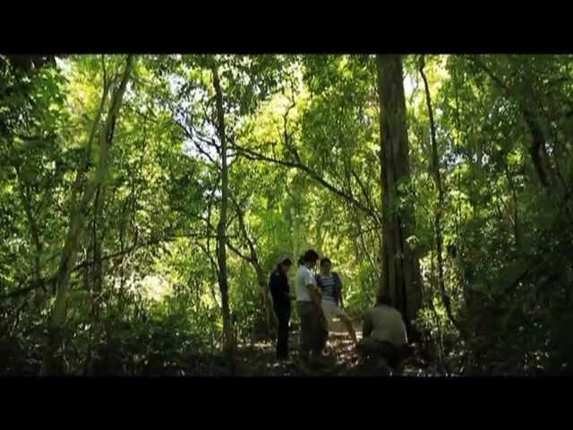 Mbaracayu Lodge Reserva Natural Del Bosque Mbaracayu Youtube