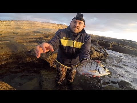 Mega Sea Bream To Start 2019 - Catch And Release