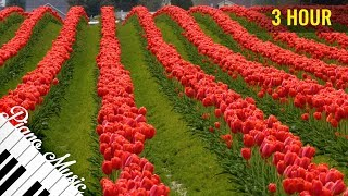 3 HOURS Relaxing Piano Music #93 - Tulip Fields - Calming Music for Studying, Focus & Relaxatio