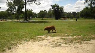Flotus At Dog Park
