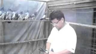 shafiq butt Dabwale Kabootar.flv  03214427681