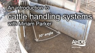 An introduction to cattle handling systems with Miriam Parker