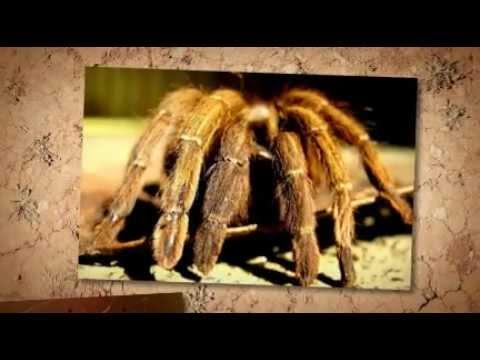 Mtb Pest Control Pest Control Services Maryland Professional Exterminators Washington Dc