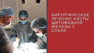 Хирургическое лечение кисты щитовидной железы у собак